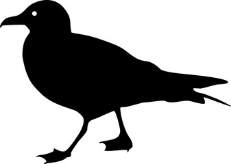 Silhouette of seagull