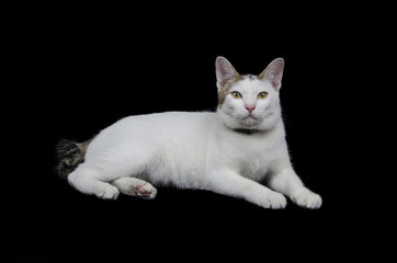 Cute cat isolated on black background