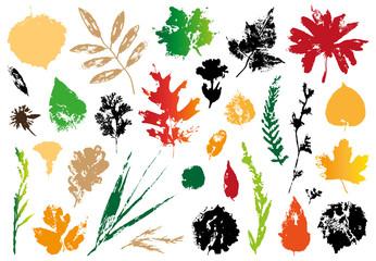 imprint of autumn leaves