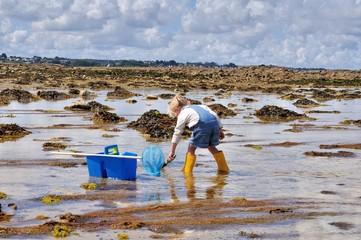 Une fillette et sa mère cherchent des crabes et crevettes dans l'eau de mer