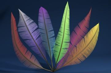 Piume colorate