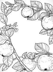 Black and white drawing of branches with apples and leaves