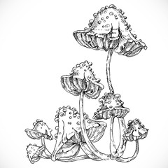 Black and white drawing of poisonous mushrooms on a thin stalk i