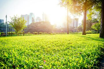 green park under sunshine