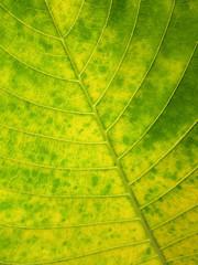 grunge green leaf background