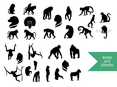 The big set of wild monkeys silhouettes.