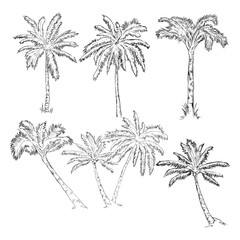 Vector Set of Sketch Palm Trees