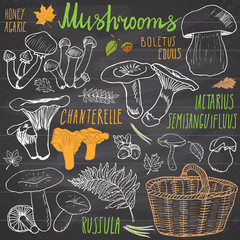 Mushrooms sketch doodles hand drawn set. Different types of edible and non edible mushrooms. Vector icons on white background
