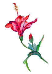 Handmade hibiscus fuchsia red color. Watercolor original art. Tropical flower isolated on white background.