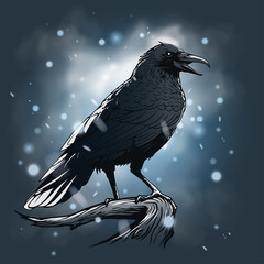 Raven illustration