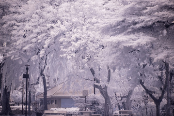 Landscape garden tree and grass(Infra-red photo )