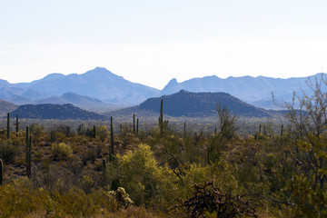 Dawn at Organ Pipe Cactus National Monument on the US-Mexico border
