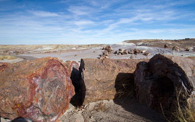 Cutaway section of a fossilized tree in Petrified Forest National Park in Arizona
