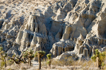 Joshua trees in California's Red Rock Canyon State Park in Mojave Desert