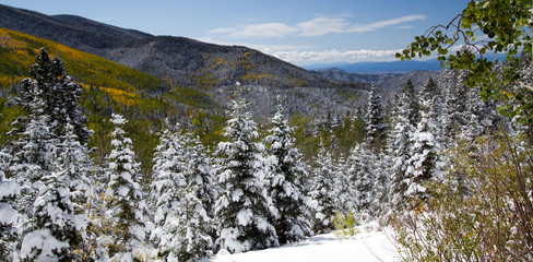 An early snowfall brightens yellow aspens in Santa Fe National Forest in New Mexico