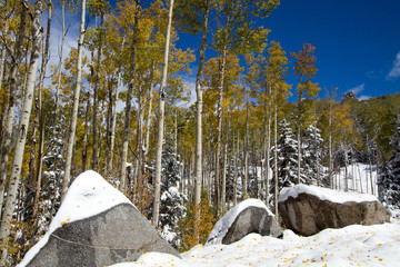 An early snowfall brightens yellow aspens and boulders in Santa Fe National Forest in New Mexico