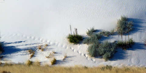 Foot prints and autumn colors in White Sands National Monument in New Mexico