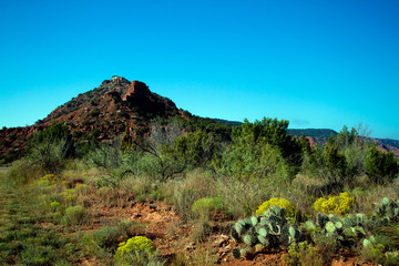 Cacti, yellow wildflowers and eroded hills at Caprock Canyons State Park in Texas
