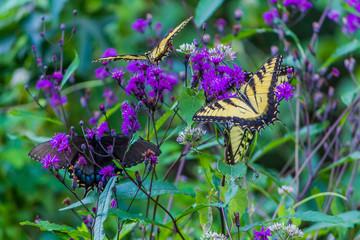 3 butterflies on flowers