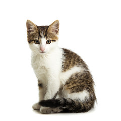 Cute kitten sitting on a white background