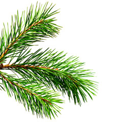 Pine twig