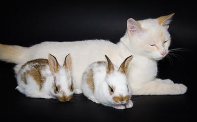 Gatto con due coniglietti
