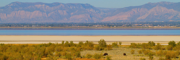 Panorama of Great Salt Lake, Wasatch Mountains and two buffalo on Antelope Island State Park in Utah