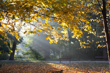 autumn nature in the morning