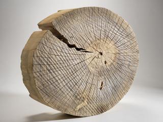 Sezione di tronco d'albero