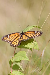 butterfly on weeds