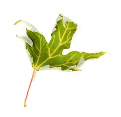 Poster Geometric animals Dry maple leaf