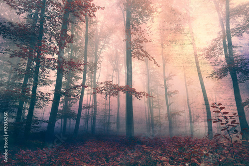 Wall mural Grunge beautiful red colored foggy forest landscape background. Grunge filter effect used.