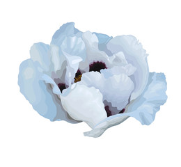beautiful Plant Paeonia arborea (Tree peony) white flower with the effect of a watercolor drawing isolated on white background.