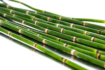 Thin bamboo grove