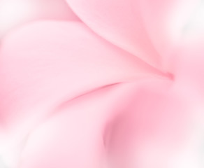 sweet flowers petal in soft style for background in soft style f