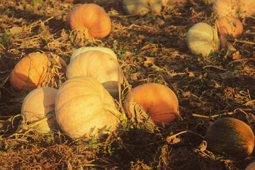 Pumpkins old style