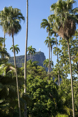 Corcovado Mountain stands in the distance beyond royal palm trees at the Jardim Botanico botanic gardens in Rio de Janeiro Brazil