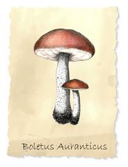 Boletus mushrooms.