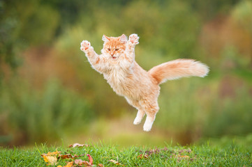 Funny red cat flying in the air in autumn
