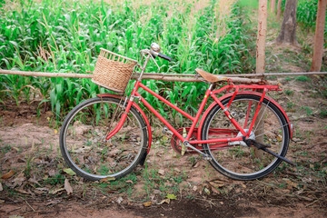 red vintage bicycle with cornfield