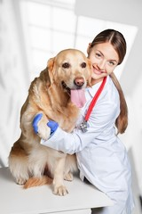 Veterinarian and pet.