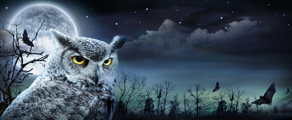 Poster de jardin Chouette Halloween Scene With Owl And Full Moon
