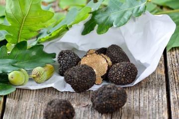 Schwarze Trüffeln aus Frankreich - tuber uncinatum - in Einschlagpapier und mit Eichenlaub