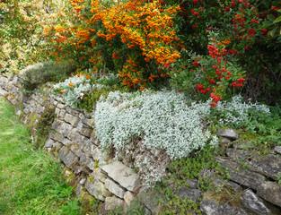 Trockenmauer aus Natursteinen, Natursteinmauer im Herbst, Steingarten mit Stauedenpflanzen und Bodendeckern