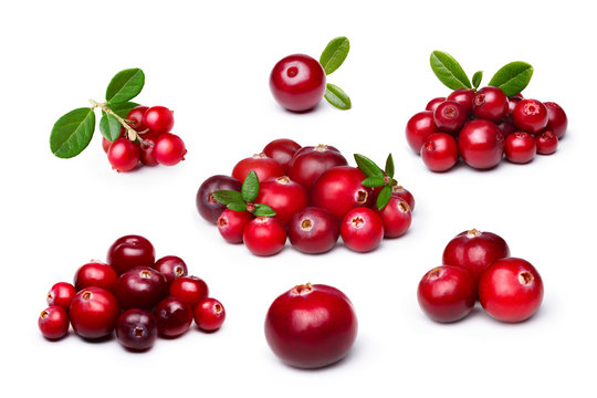 Cranberry,foxberry (lingonberry) isolated set