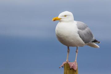 カモメと海 The sea and gull