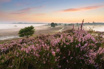 Wall Murals Bestsellers Romantic sunrise in a Dutch nature moorland