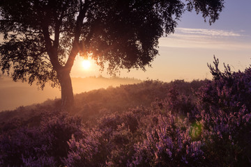 Romantic sunrise in a Dutch nature moorland