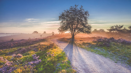 Beautiful sunrise in a Dutch landscape with flowering heather