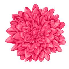 Foto op Plexiglas Dahlia beautiful pink dahlia isolated on white background.